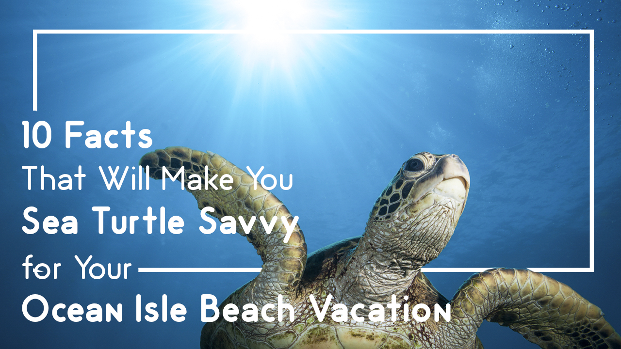 10 Facts That Will Make You Sea Turtle Savvy for Your Ocean Isle Beach Vacation