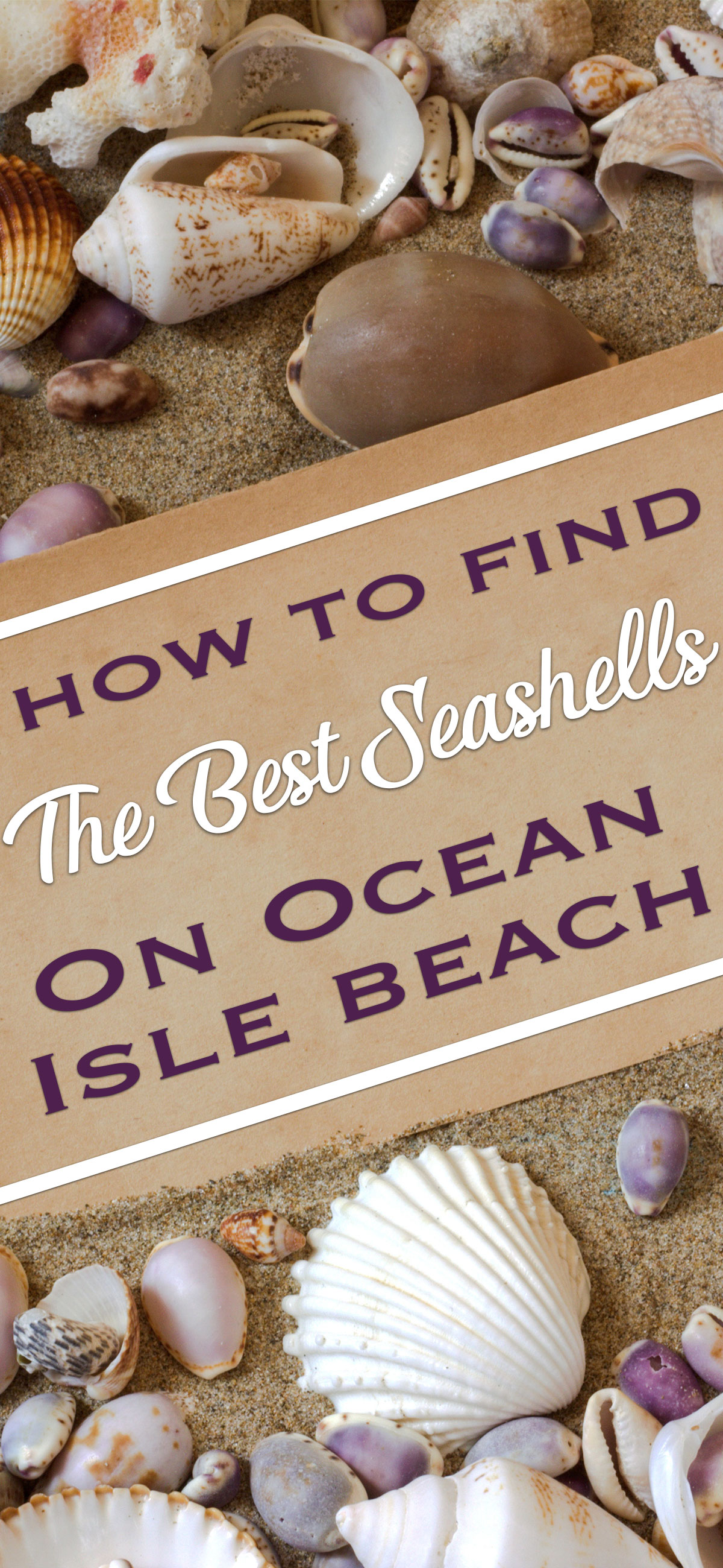How to Score the Best Seashells on Ocean Isle Beach Pin