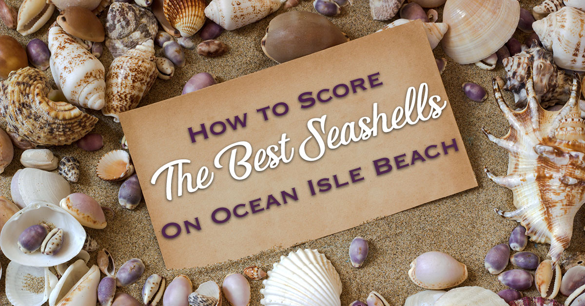 How To Score The Best Seashells On Ocean Isle Beach