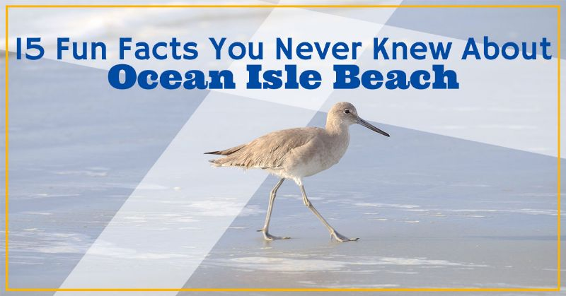 Fun Facts You Never Knew About Ocean Isle Beach