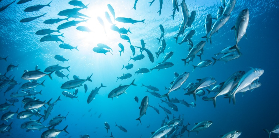 fish swimming in the ocean | Williamson Realty