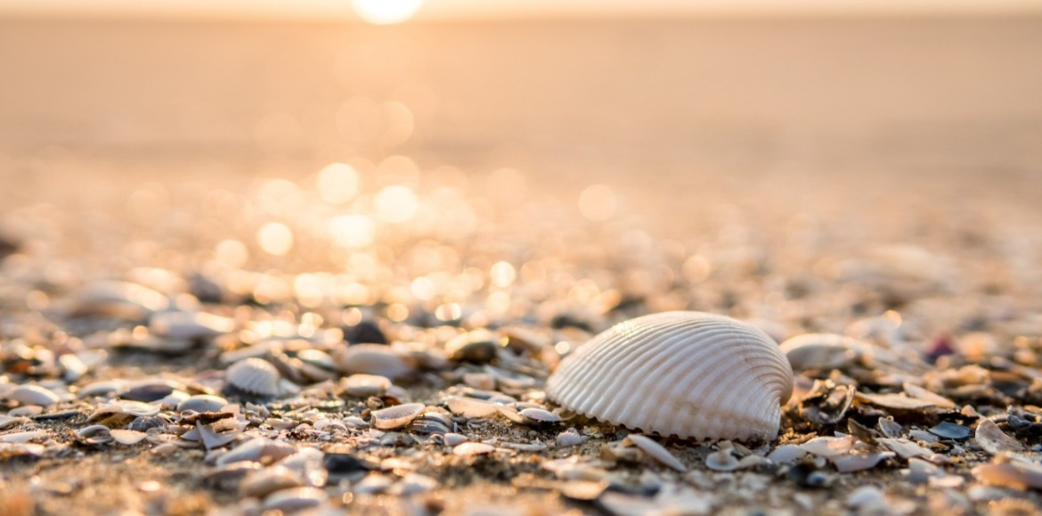 seashells on the beach | Williamson Realty