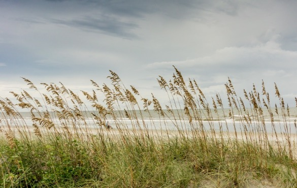 sea oats ocean isle beach, nc | WIlliamson Realty Vacations