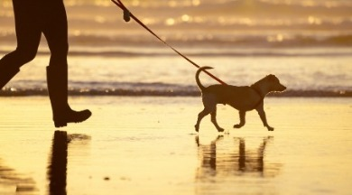 dogs on ocean isle beach  | WIlliamson Realty Vacations
