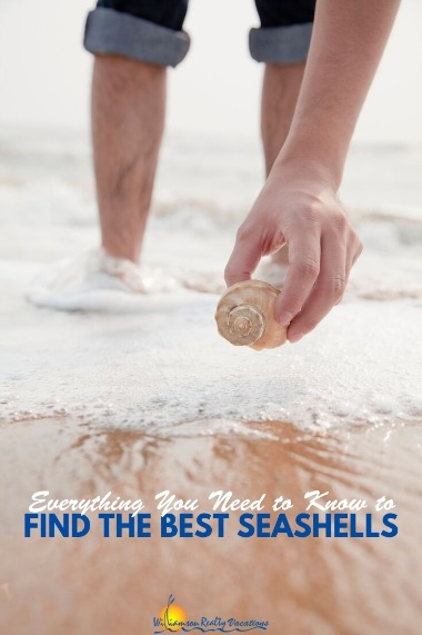 Everything You Need to Know to Find the Best Seashells | Williamson Realty Vacations