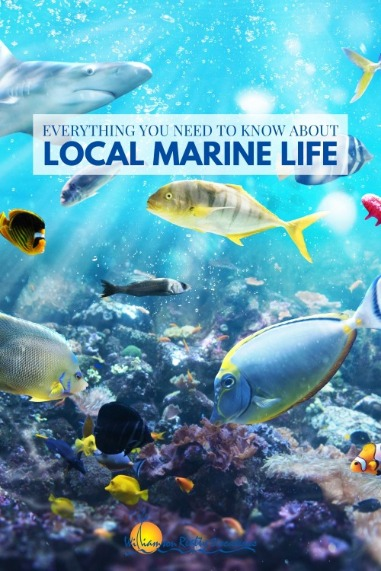 Everything You Need to Know About local Marine Life