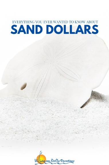Everything You Ever Wanted to Know About Sand Dollars